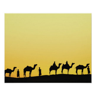 Camels and camel driver silhouetted at sunset, 3 poster