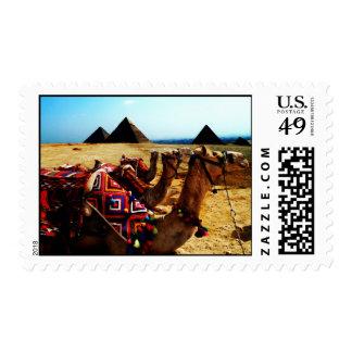 Camels at Giza Pyramids Postage
