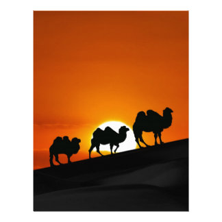 Camels at sunset letterhead