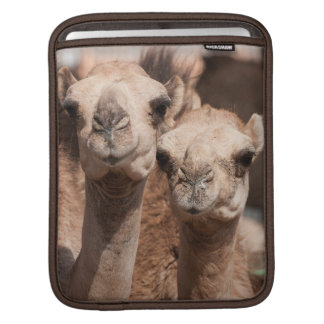 Camels at the Camel market in Al Ain near Dubai Sleeve For iPads