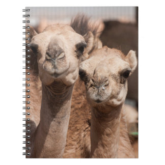 Camels at the Camel market in Al Ain near Dubai Spiral Notebook