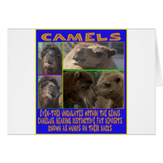 CAMELS - even-toed ungulates Card