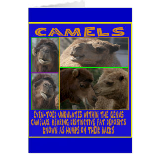 CAMELS - even-toed ungulates Cards