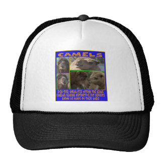 CAMELS - even-toed ungulates Trucker Hat