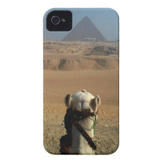 Camel's Eye View of Giza iPhone 4 Case-Mate Case