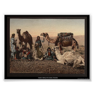 Camels halting in the desert, Palestine Poster