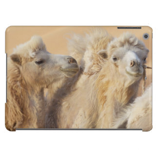 Camels in a desert convoy case for iPad air