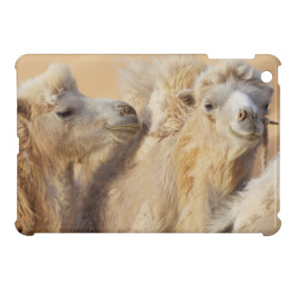 Camels in a desert convoy cover for the iPad mini