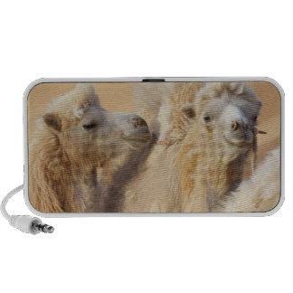 Camels in a desert convoy mini speaker