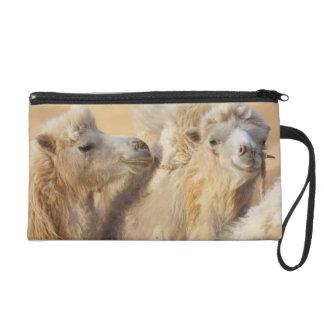 Camels in a desert convoy wristlet