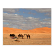 Camels in Sahara desert Postcard