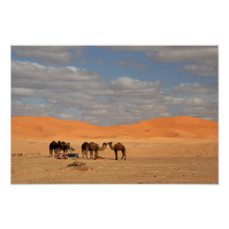 Camels in Sahara desert Poster