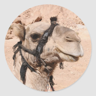 Camels in the desert at St. Catherine's Classic Round Sticker
