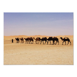 Camels in the desert poster
