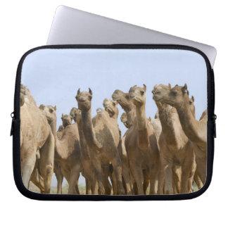 Camels in the desert, Pushkar, Rajasthan, India Laptop Sleeve