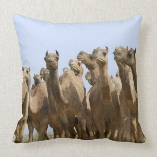 Camels in the desert, Pushkar, Rajasthan, India Pillow