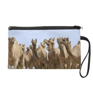 Camels in the desert, Pushkar, Rajasthan, India Wristlet Purse