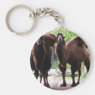 Camels Keychain