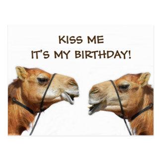 Camels Kissing Funny Postcard