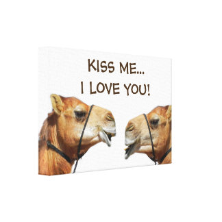 Camels Kissing Funny Wrapped Canvas