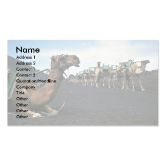 Camels, Lanzarote Double-Sided Standard Business Cards (Pack Of 100)