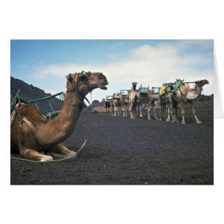 Camels, Lanzarote Greeting Card