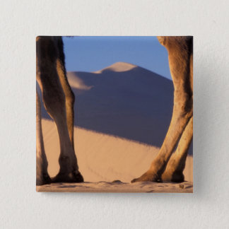 Camel's legs with sand dunes, Dunhuang, Gansu Pinback Button