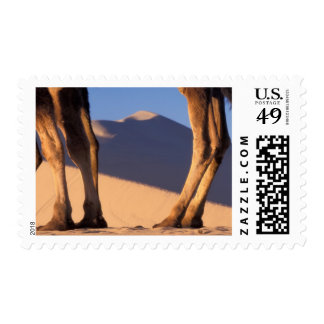 Camel's legs with sand dunes, Dunhuang, Gansu Postage
