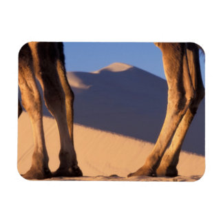 Camel's legs with sand dunes, Dunhuang, Gansu Vinyl Magnets