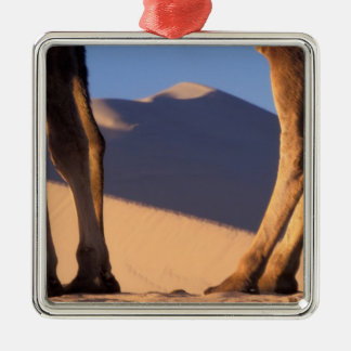 Camel's legs with sand dunes, Dunhuang, Gansu Square Metal Christmas Ornament