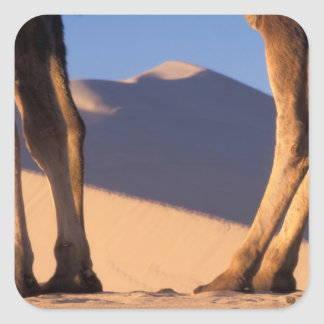 Camel's legs with sand dunes, Dunhuang, Gansu Square Sticker