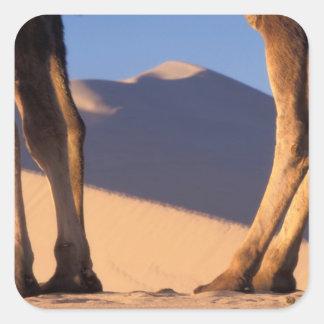 Camel's legs with sand dunes, Dunhuang, Gansu Sticker
