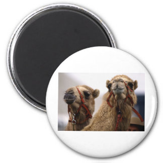 Camels 2 Inch Round Magnet