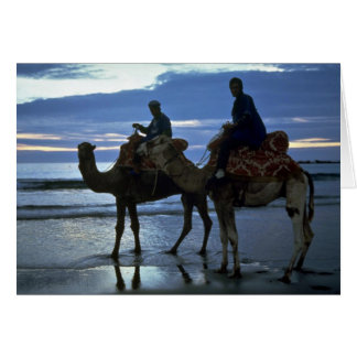 Camels, Morocco Card