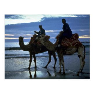 Camels, Morocco Postcards