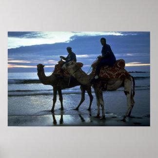 Camels, Morocco Print