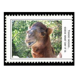 Camels question postcard