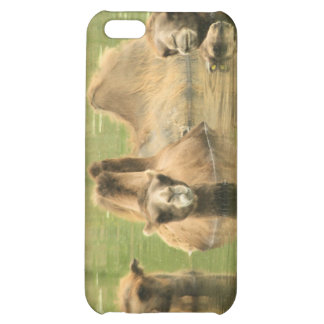 Camels Yum iPhone 5C Cases