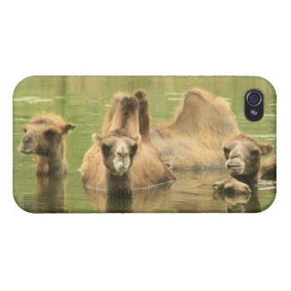 Camels Yum iPhone 4 Cases