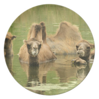 Camels Yum Party Plate
