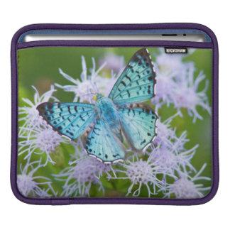 Cameron County, Texas. Blue Metalmark iPad Sleeve