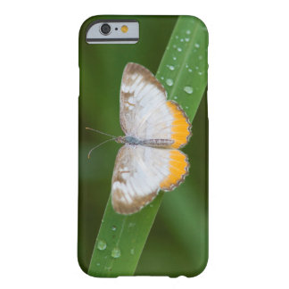Cameron County, Texas. Common Mestra Barely There iPhone 6 Case