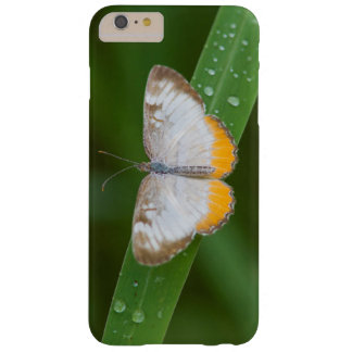Cameron County, Texas. Common Mestra Barely There iPhone 6 Plus Case