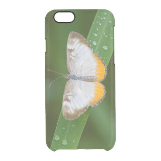 Cameron County, Texas. Common Mestra Clear iPhone 6/6S Case