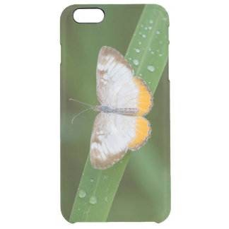 Cameron County, Texas. Common Mestra Clear iPhone 6 Plus Case