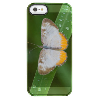 Cameron County, Texas. Common Mestra Clear iPhone SE/5/5s Case