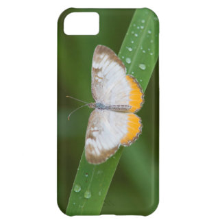 Cameron County, Texas. Common Mestra iPhone 5C Case