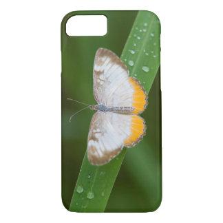 Cameron County, Texas. Common Mestra iPhone 7 Case
