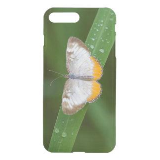 Cameron County, Texas. Common Mestra iPhone 7 Plus Case
