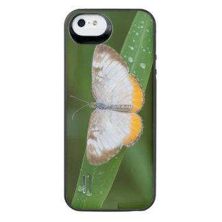 Cameron County, Texas. Common Mestra iPhone SE/5/5s Battery Case